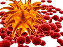 Bactéries oranges et cellules rouges Photographie stock libre de droits