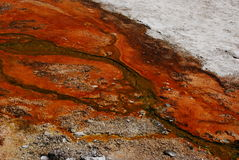 Bactéries oranges et rouges de Thermophile chez Yellowstone Images stock