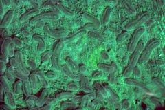 Bactéries s'élevant dans une boîte de Pétri photographie stock libre de droits