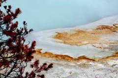 Bactéries thermophiles au parc national de Yellowstone de bassin de biscuit Image libre de droits