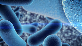 Bacteriële besmetting Stock Foto