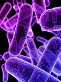 Bacteriën Stock Afbeeldingen