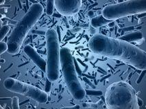 Bacteriën onder een aftastenmicroscoop die worden gezien stock illustratie