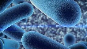 Bacteriën onder microscoop Stock Foto's