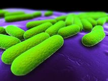 Bacteria Stock Photos