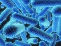 Bacteria Royalty Free Stock Photo