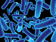 Bacteria Royalty Free Stock Photography