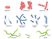 Bacteria. Medical illustration of some types of bacteria Royalty Free Stock Photos