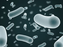 Bacteria Stock Image