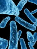 Bacteria Royalty Free Stock Images