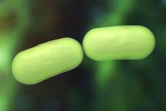 Bacteria Stock Photography