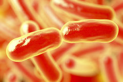 Bacteria. L infection. Rod-shaped Stock Image