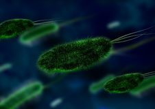 Bacteria, Bacterial Species Stock Image