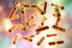 Bacteria Bacteroides fragilis, the major component of normal microbiome of human intestine. Bacteria Bacteroides fragilis, one of the major components of normal royalty free illustration