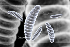 Bacteria cell Stock Images