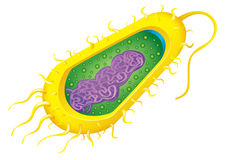 Bacteria cell Stock Photography