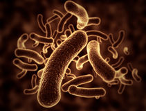 Bacteria cells Royalty Free Stock Photo