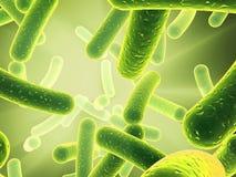 Bacteria - close up Royalty Free Stock Image