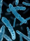 Bacteria close up Stock Photos