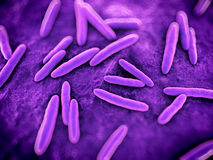 Bacteria close up. 3d rendered scientific illustration of some bacteria Royalty Free Stock Photo