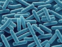 Bacteria close up. Escherichia coli bacteria 3d close up. Rod-shaped stock illustration