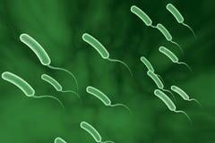Bacteria de los cholerae del vibrión stock de ilustración