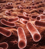 Bacteria depth of field Royalty Free Stock Photo