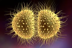 Bacteria gonococcus or meningococcus Royalty Free Stock Photography