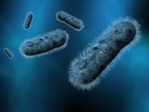 Bacteria. A group of bacteria in human blood with blue background Royalty Free Stock Photo