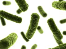 Bacteria illustration. 3d rendered illustration of some isolated bacteria Royalty Free Stock Photo