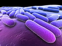 Bacteria illustration Royalty Free Stock Images