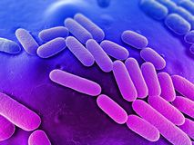 Bacteria illustration Stock Image