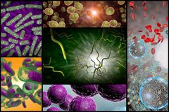 Bacteria Infection Collage Stock Image