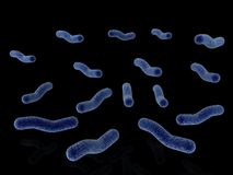Bacteria isolated on black Royalty Free Stock Image