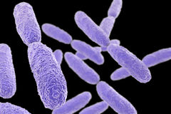 Bacteria Klebsiella, illustration Royalty Free Stock Photos