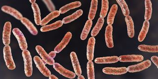 Bacteria Lactobacillus, normal flora of small intestine. Bacteria Lactobacillus, 3D illustration. Normal flora of small intestine, lactic acid bacteria royalty free illustration