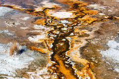 Bacteria Mat and Dirt. Bacteria mat growth in the Upper Geyser Basin at Yellowstone National Park Stock Image