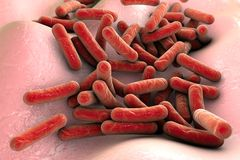 Bacteria Mycobacterium tuberculosis Royalty Free Stock Photo