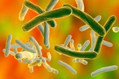 Bacteria Mycobacterium tuberculosis Stock Photos