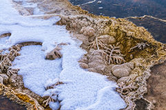 Bacteria Pattern - Yellowstone in Winter Stock Photos