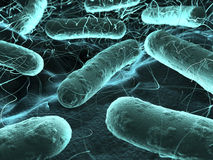 Bacteria seen under a  scanning microscope Stock Photo
