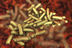 Bacteria Shigella which cause food-borne infection shigellosis Royalty Free Stock Images