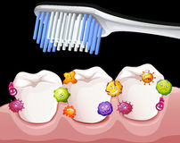 Bacteria between teeth when brushing Stock Photo