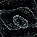 Bacteria under microscope Stock Photos