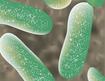 Bacteria up close Royalty Free Stock Images