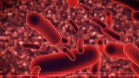Bacteria virus under microscope Stock Photos