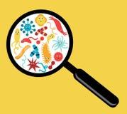 Bacteria and Viruses Stock Photo