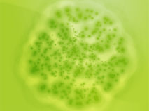 Bacterial cell growth illustration Royalty Free Stock Photography