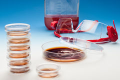 Bacterial cultures Royalty Free Stock Photos