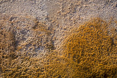 Bacterial Mats. In Midway Geyser Basin, Yellowstone National Park, United States Stock Images